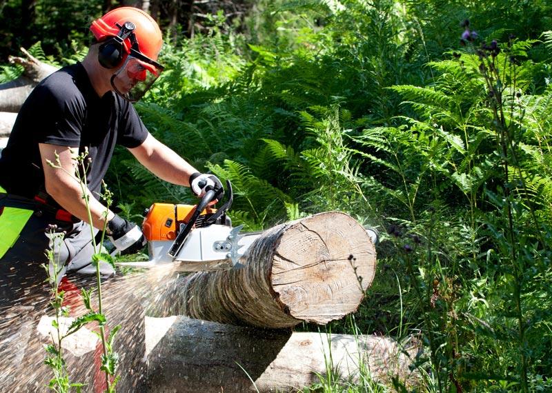 Métiers du bois